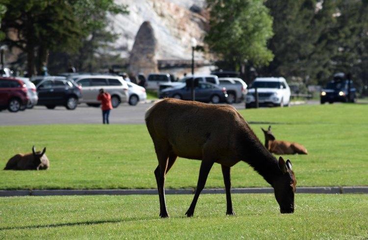 Elk 485a